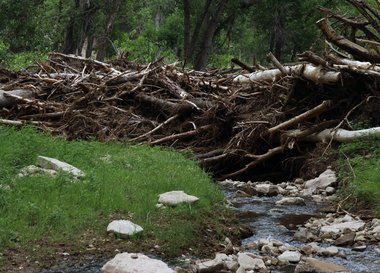 Dead timber from 2 previeous wildfires washed down the canyon during heavy rains in 2015.